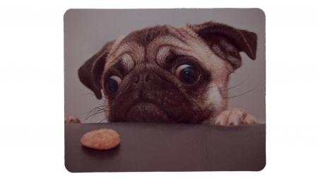 Hund vill ha kaka framsida
