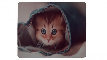 Katt i jeans framsida