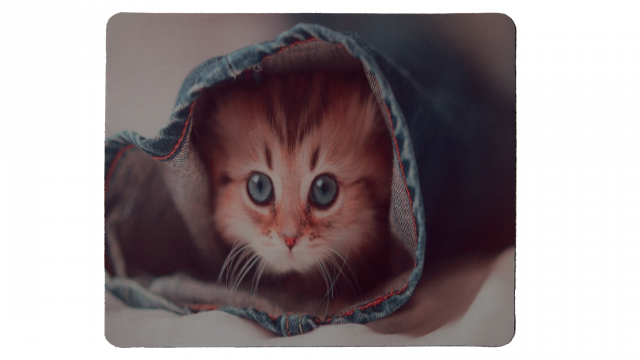 Katt i jeans