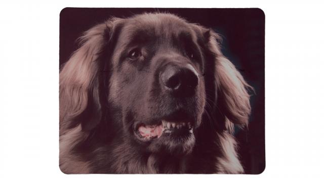 Musmatta med svart hund som motiv