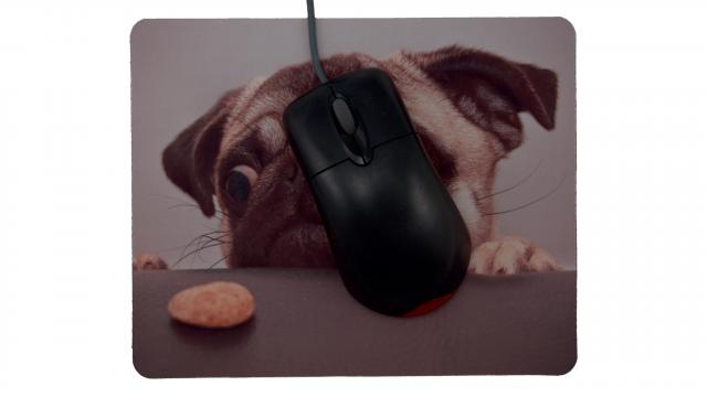 Hund vill ha kaka framsida med mus