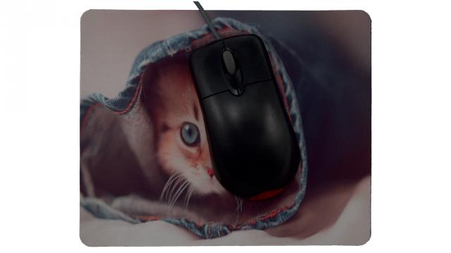 Katt i jeans framsida med mus