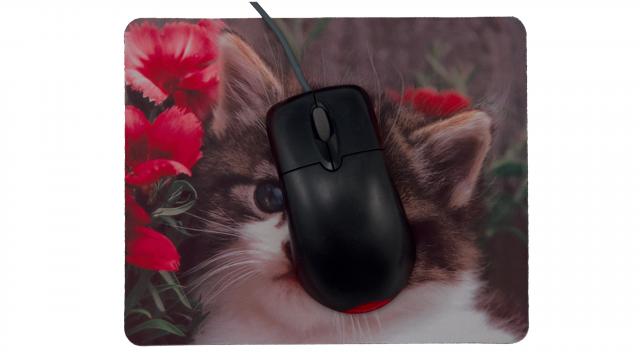 Katt med blommor framsida med mus