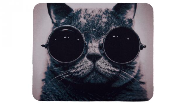 Katt med glasögon framsida