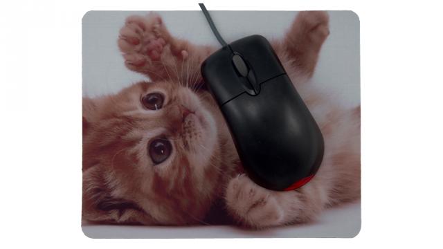 Söt katt som ligger på sidan framsida med mus