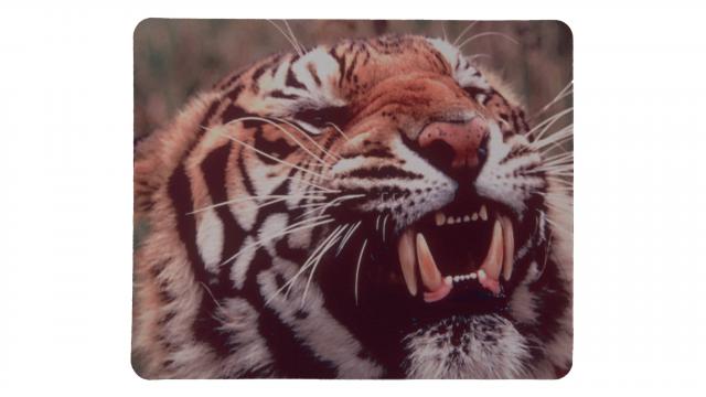 Rytande tiger framsida