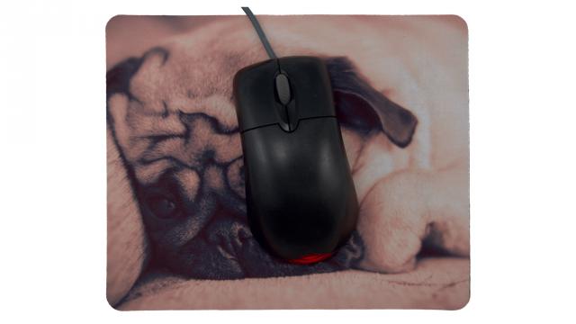 Trött valp framsida med mus