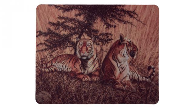 Två tigrar vilar framsida