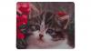 Katt med blommor framsida
