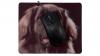 Svart hund framsida med mus